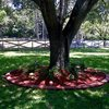 Red, Planter Landscape Borders VenKrete, Inc Coconut Creek, FL
