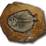 Fossil Site ConcreteNetwork.com ,