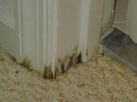 mold caused by vapor transmission