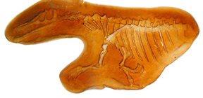 Fossil3 Site ConcreteNetwork.com