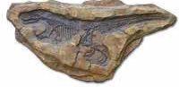 Fossil1 Site ConcreteNetwork.com
