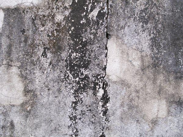 Black Mold, Mold On Concrete Site Shutterstock