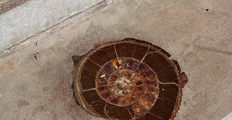 Inlay, Ammonite Site Cheng Design Berkeley, CA